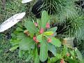 Plants Names DX7 143