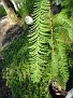 Plants Names DX7 156