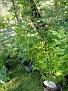 Plants Names DX7 234