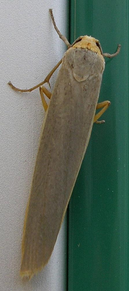 September072007_Image01_Moth-vi.jpg
