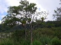 After Bijagua, road to Parque Volcano Tenorio, 700m Costa Rica 2011 224