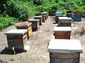 Honey Bee Hives in Mexico   Thank you Octavio Jimenez and your brother Isaac Jimenez in Mexico who tends to the bees  (5)