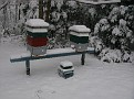 Snow Storm of December 19 2009 (37)