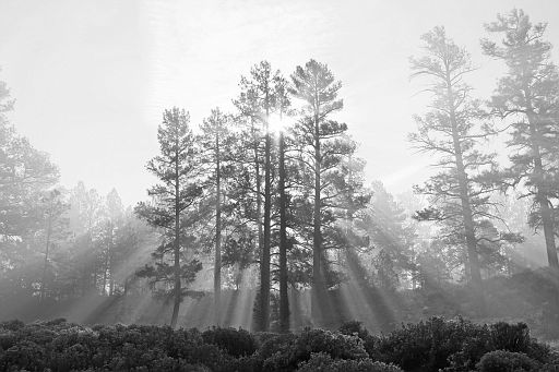 Filtered Light #5 b&w