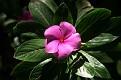 Ivydale Garden Polokwane (22)