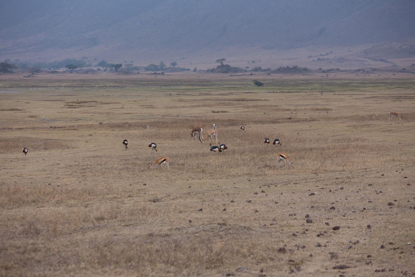 Tanzania 1 1152.jpg