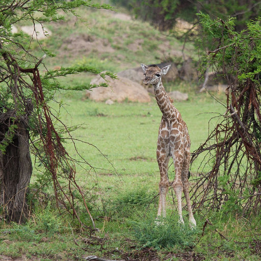 Tanzania 333.jpg