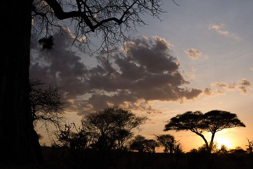 Tanzania 1 1003.jpg