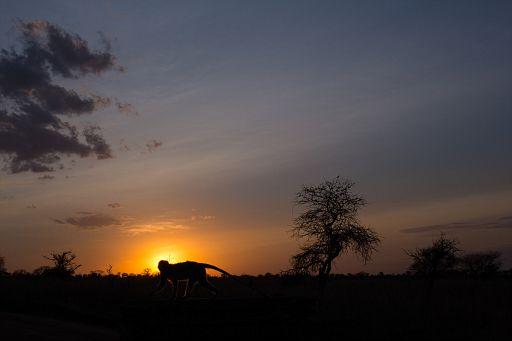 Tanzania 1 1011.jpg