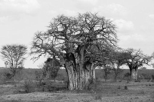 Tanzania 1 933.jpg