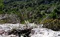Inula verbascifolia subsp  methanea