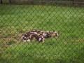 The Toledo Zoo 005