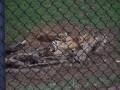 The Toledo Zoo 058