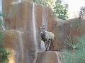 LA Zoo 074
