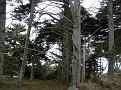 Monterey Trip Aug07 346.jpg