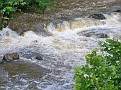 A closeup of the rapids leading to Wappingers Falls