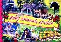 Baby Animals of Ohio