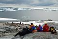 14 Penguin Watching