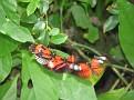 Butterfly World Butterflies Close Up17