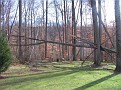 Tree Down (3)