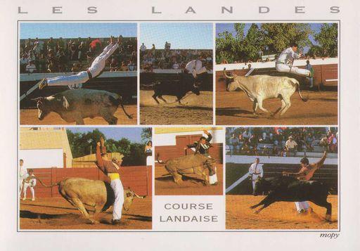 France - Course Landaise NF