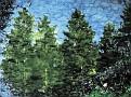 Tannenbäume aus dem Traumland?