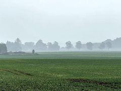 Die Wolken berühren den Boden: Herbstnebel!