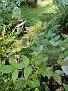 Plants Names DX7 218