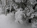 Snow Storm of December 19 2009 (113)