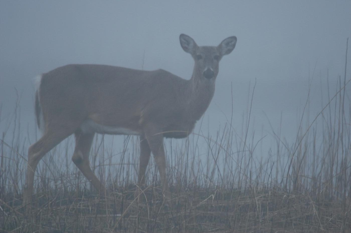 Fog at Dusk #4