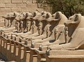 Temple of Karnak - Avenue of Ram Headed Sphinxes