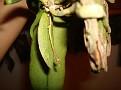 Phalaenopsis minus ( Kingidium minus )