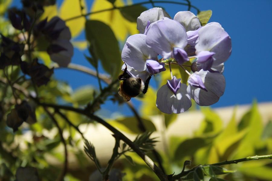 http://images56.fotki.com/v1600/photos/2/243162/8781169/img395-vi.jpg