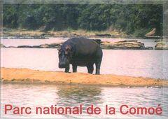 Cote D'Ivore - HIPPOPOTAMUS NA