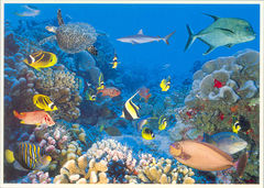 French Polynesia - CORAL FISHES NA