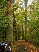 Blomberger Wald