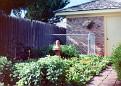 Back garden flower patch, Amarillo, Texas
