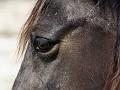 horseeye1.jpg