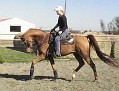 A CHANCE ECHO #607683 (CWP Chances Are x Echo Sonataa, by Echo Magnifficoo) 2000 chestnut gelding