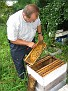 Jersey Cape Beekeepers Meeting for Aug 09  (35)