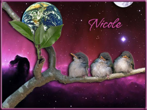 Nicole - Branching Out-Jorge