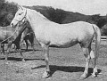 UR # 1613 (*Nasr x Kedem) 1939 grey mare bred by Travelers Rest/ General J. M. Dickinson