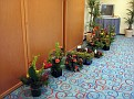 Plants Arriving [Photo Gallery]