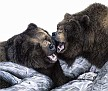 grizzly pair01