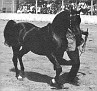 G-AMIGO #25401 (Niga x Ga-Rageyma, by Ferzon) 1963-1989 bay stallion bred by Daniel C Gainey; sired 184 registered purebreds