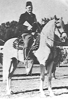 RAS-EL-AYN #1216 (Axdir x *Meca, by Ursus) 1933 grey stallion bred by Marquis de Domecq; imported to USA 1934 by James Draper. Sired 17 registered purebreds in the US.
